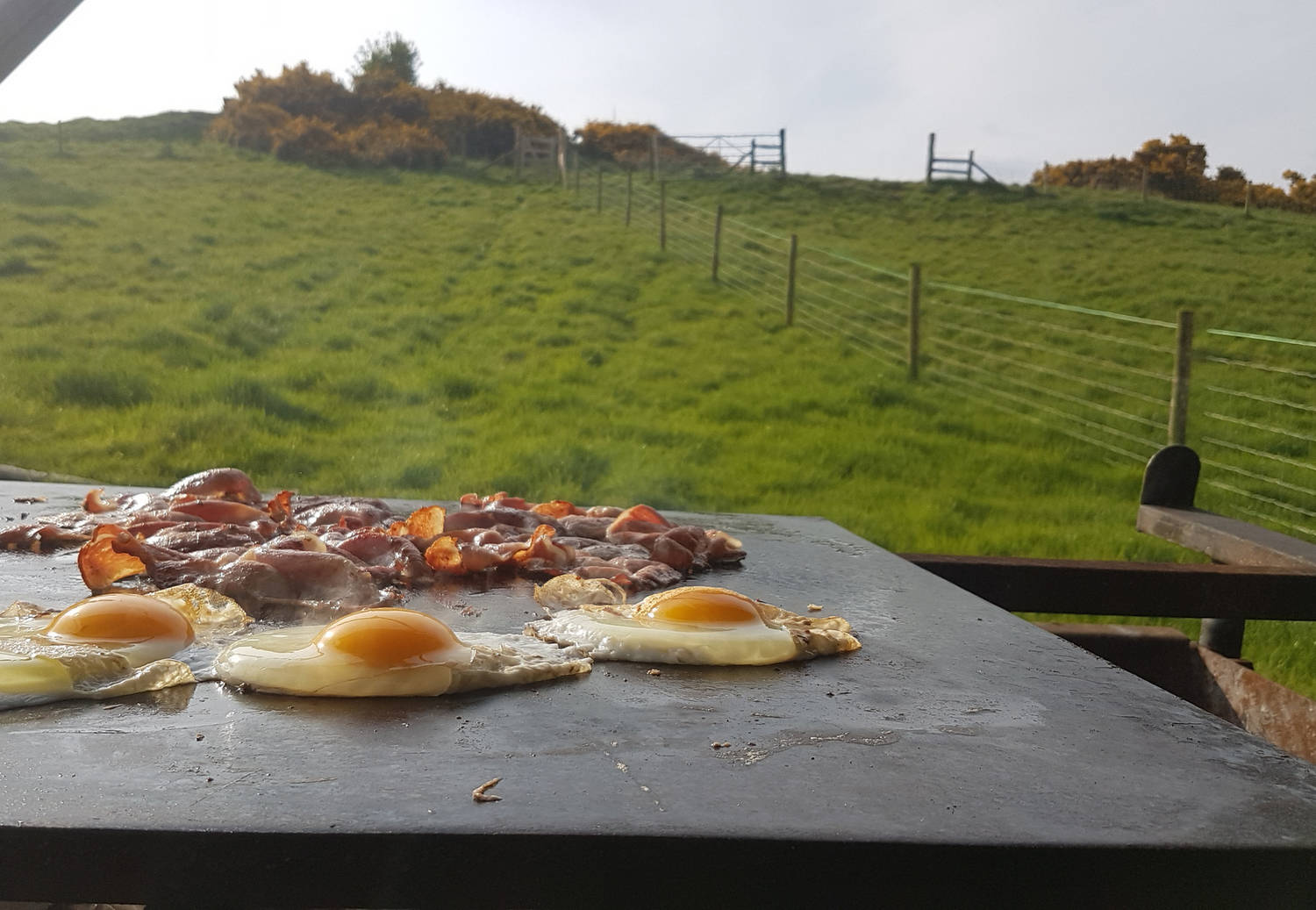 A photograph of eggs and bacon being cooked outdoors with a view of a field.