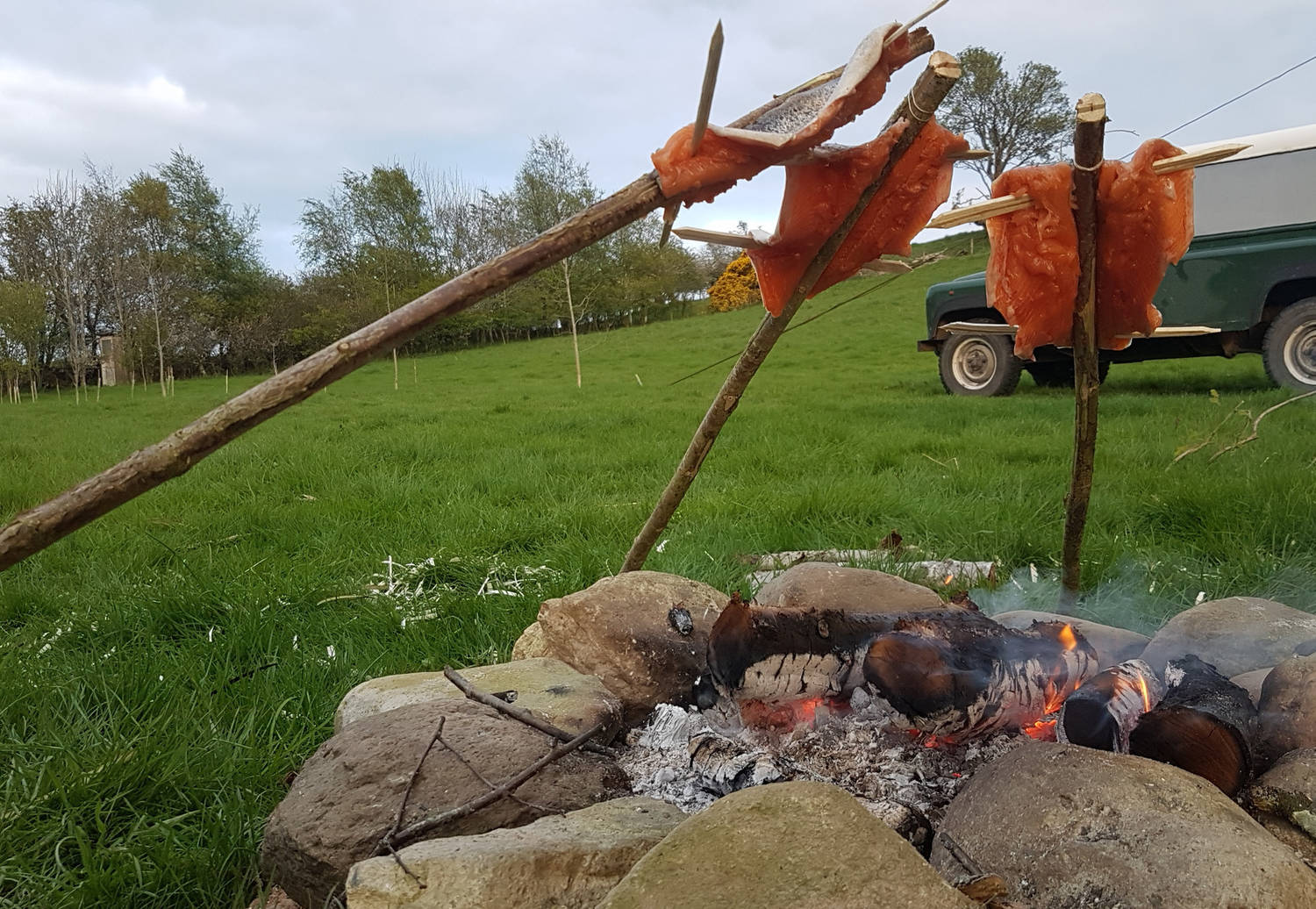 A photograph of trout being cooked on sticks over an outdoor fire